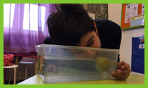 Bobbing for apples game